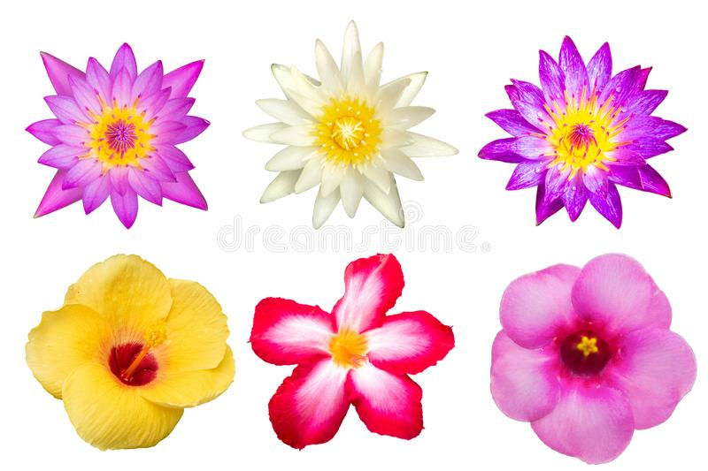 Colourful flowers isolated on white background stock image
