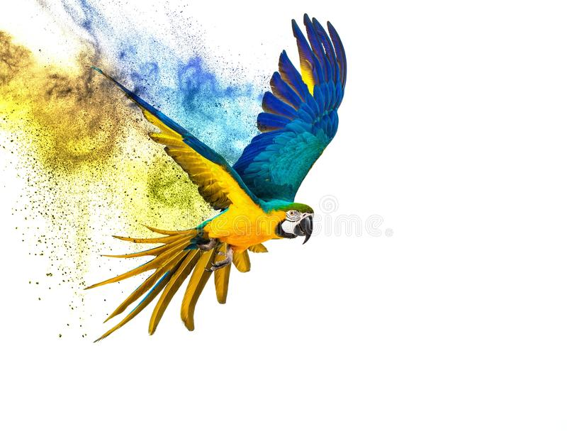 Colourful flying parrot. Isolated on white stock photo