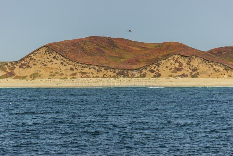 Colourful hills at Monterey Bay royalty free stock photos