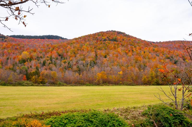 Colourful Hillses Maple Tree Forest stock images