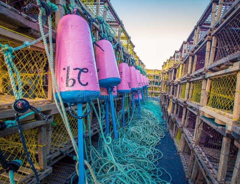 Colourful homara połów pociesza fotografia royalty free