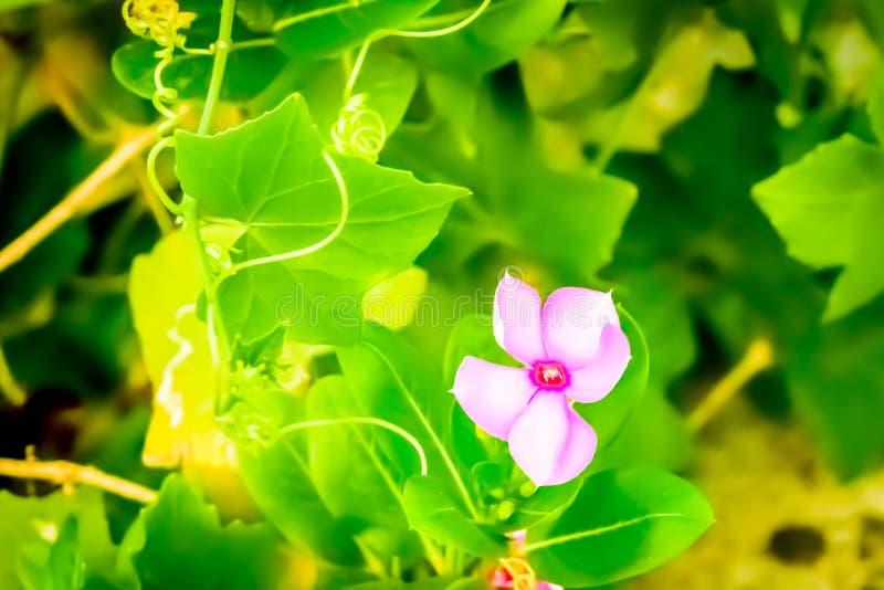 Colourful kwiat chwytający od kwiatu ogródu zdjęcie stock