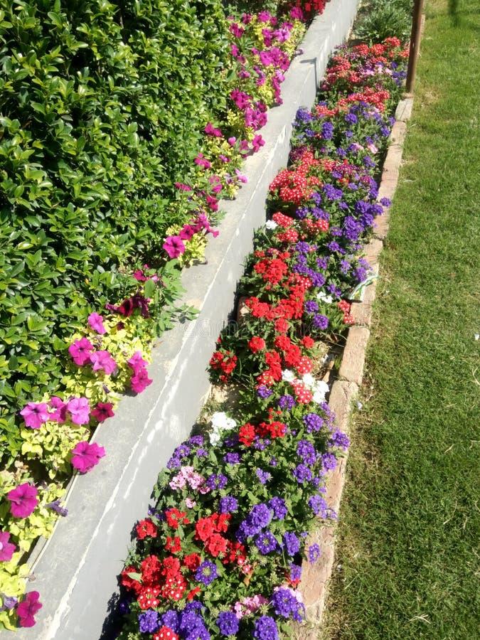 Colourful kwiaty robi widoku Zadziwiać zdjęcie royalty free