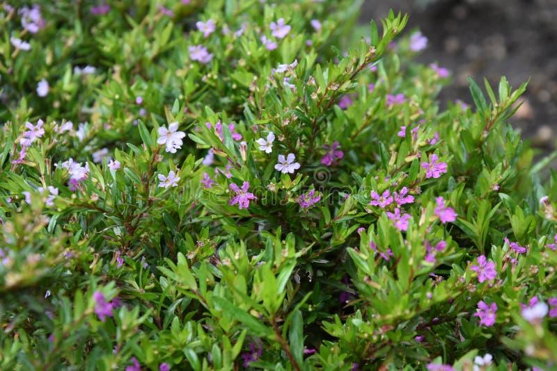 Colourful kwiaty w ogródzie fotografia stock