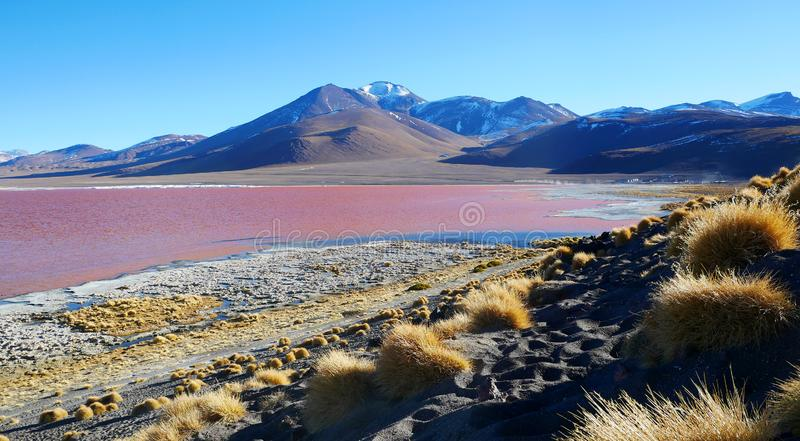 """The colourful Laguna Colorada, Salar de Uyuni, Bolivia. The colourful Laguna Colorada or """"Red Lagoon"""" at 4,278 m, gets its red colour by a special stock photo"""