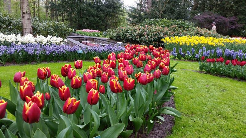Colourful landscaping in Keukenhof Netherlands stock photo