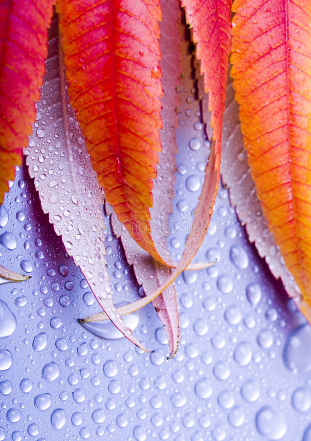 Colourful leaves stock photography