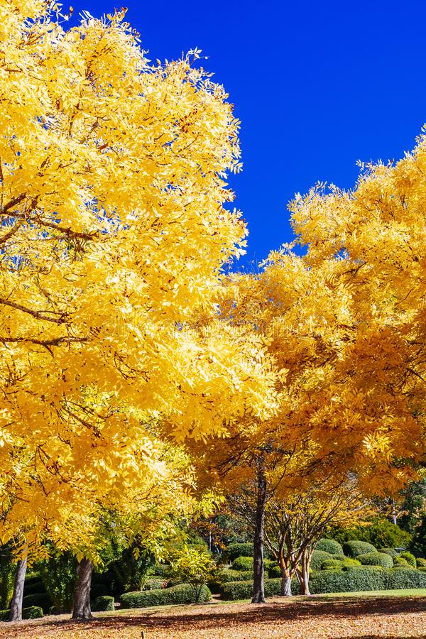 Colourful leaves in Mount Lofty Botanical Gardens, South Australia royalty free stock photo