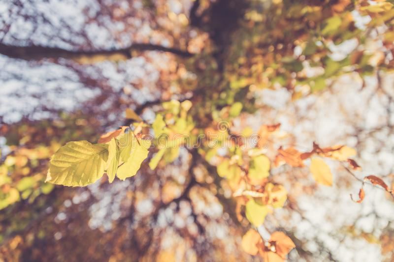 Colourful leaves in a park, autumn, copy space royalty free stock photos
