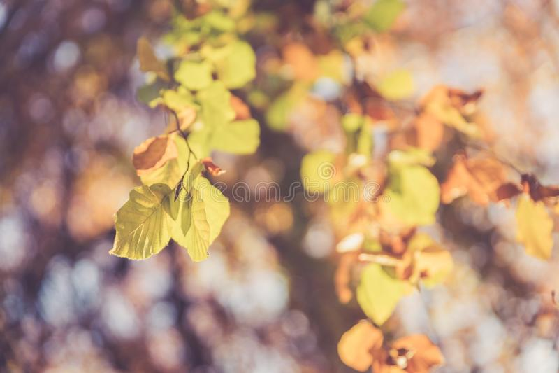 Colourful leaves in a park, autumn, copy space stock photos