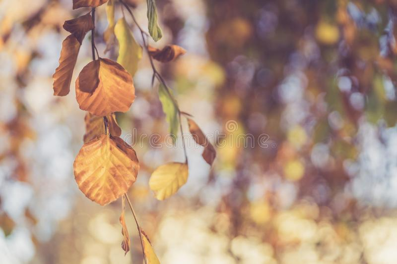 Colourful leaves in a park, autumn, copy space royalty free stock images
