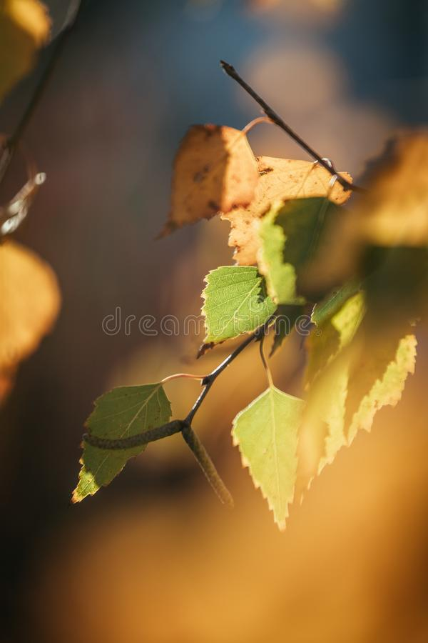 Colourful leaves in a park, autumn, copy space stock image