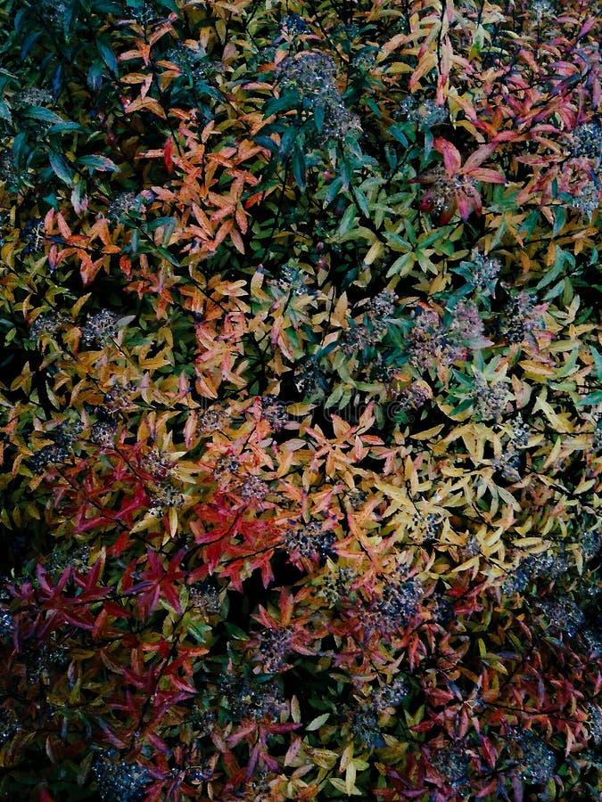 Colourful liście obrazy stock