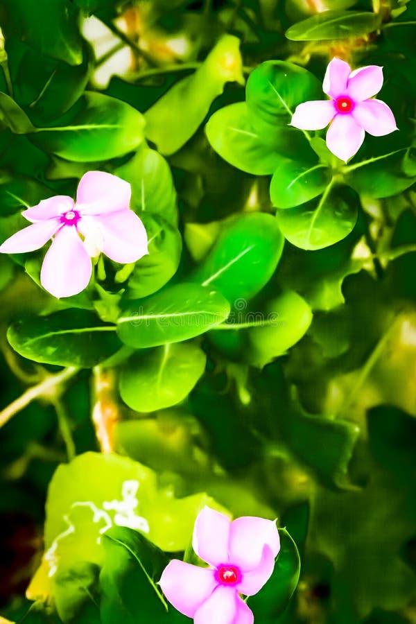 Colourful menchia kwiat chwytający od kwiatu ogródu fotografia royalty free
