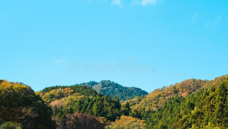 Colourful mountain in autumn season background in Japan. Colourful forest on the mountain in autumn seasonal background in Japan countryside stock photography