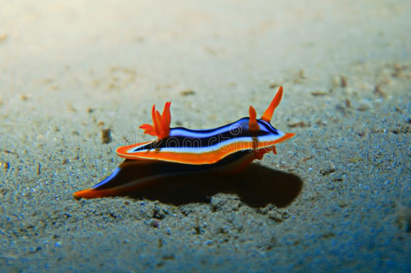 Colourful nudi branch royalty free stock images