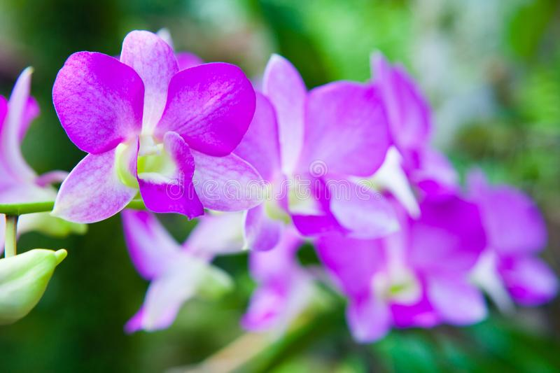Colourful orchid flowers on bright summer day stock photos