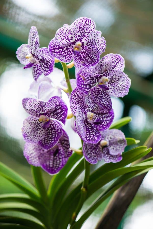 Colourful orchidea kwiaty zdjęcie stock