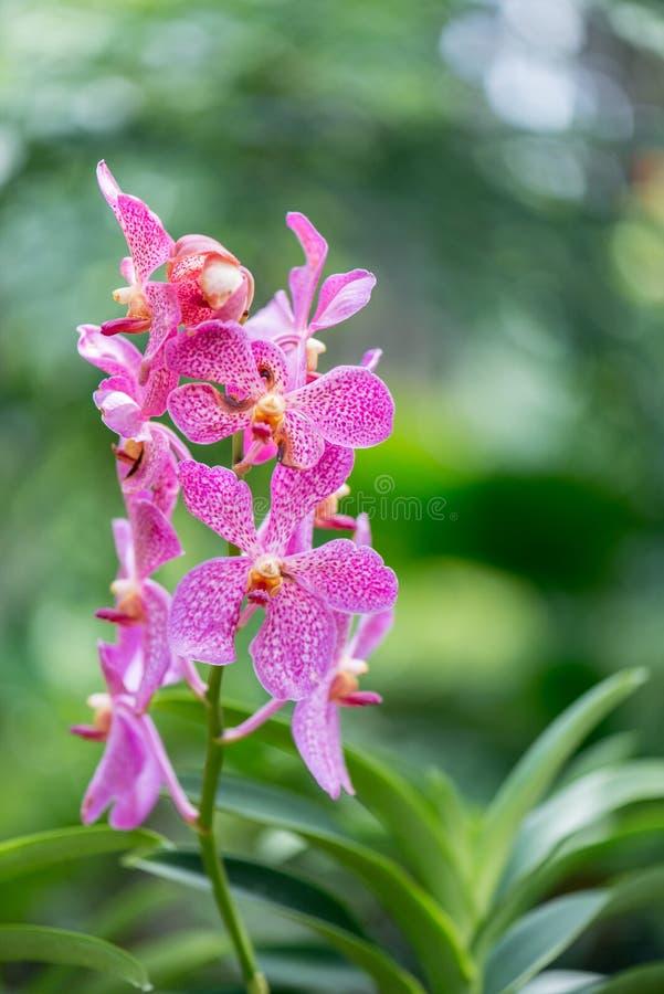 Colourful orchidea kwiaty obrazy stock