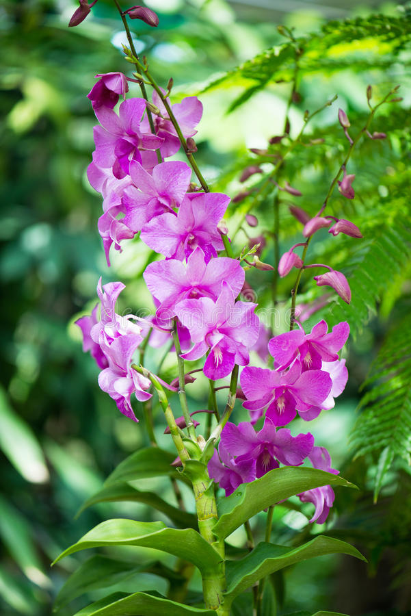 Colourful orchidea kwitnie na jaskrawym obrazy royalty free