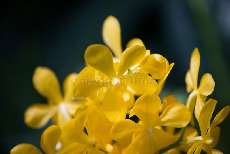 Colourful orchidea kwitnie na jaskrawym fotografia royalty free