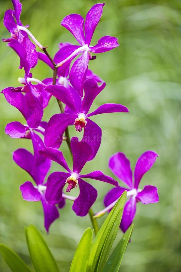 Colourful orchidea kwitnie na jaskrawym fotografia stock