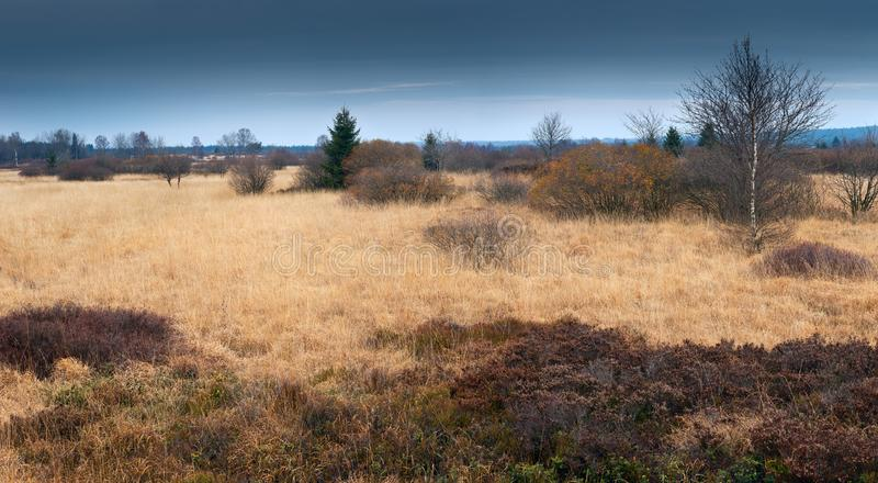 Colourful panorama from the heathland/ moorland in National Park The High Fens / Hautes Fagnes. Colourful panorama from the heathland/ moorland in National Park stock photography