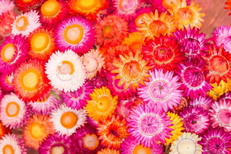 Colourful of paper flower for background. Colourful of paper flower for texture and background stock photos