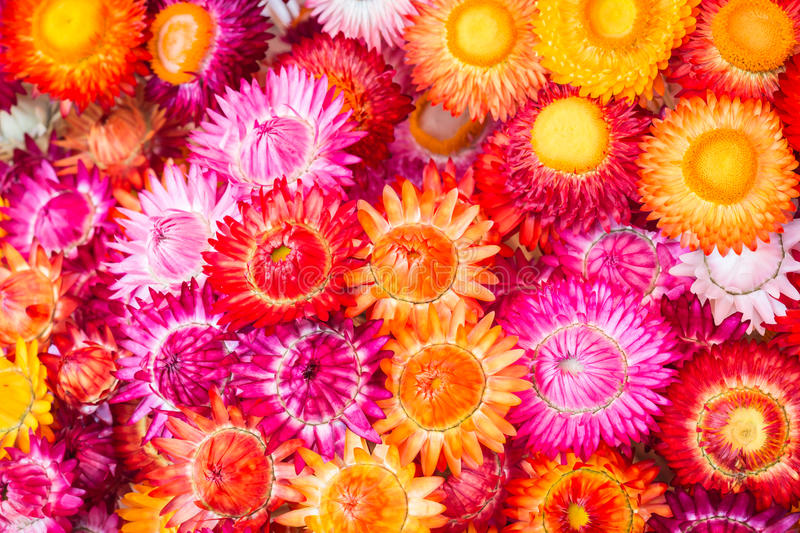 Colourful of paper flower for background. Colourful of paper flower for texture and background stock images