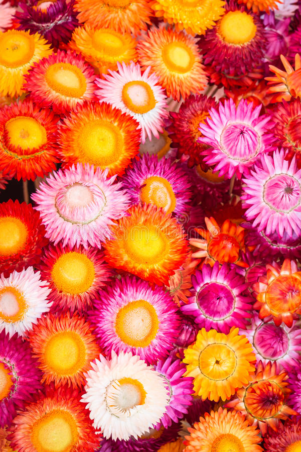 Colourful of paper flower for background. Colourful of paper flower for texture and background royalty free stock photos