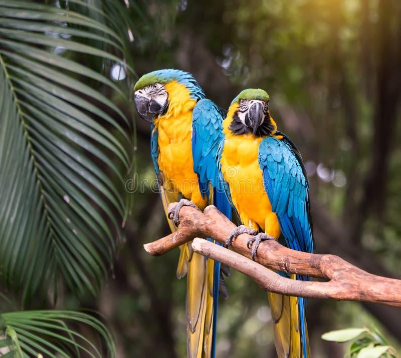 Colourful papuga ptaka obsiadanie zdjęcia stock