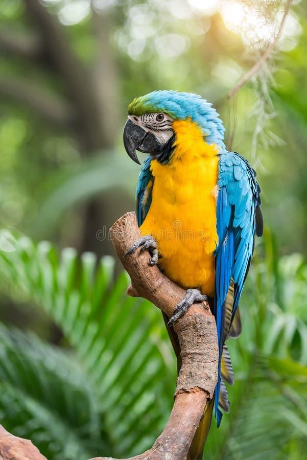 Colourful papugi ptasie fotografia royalty free