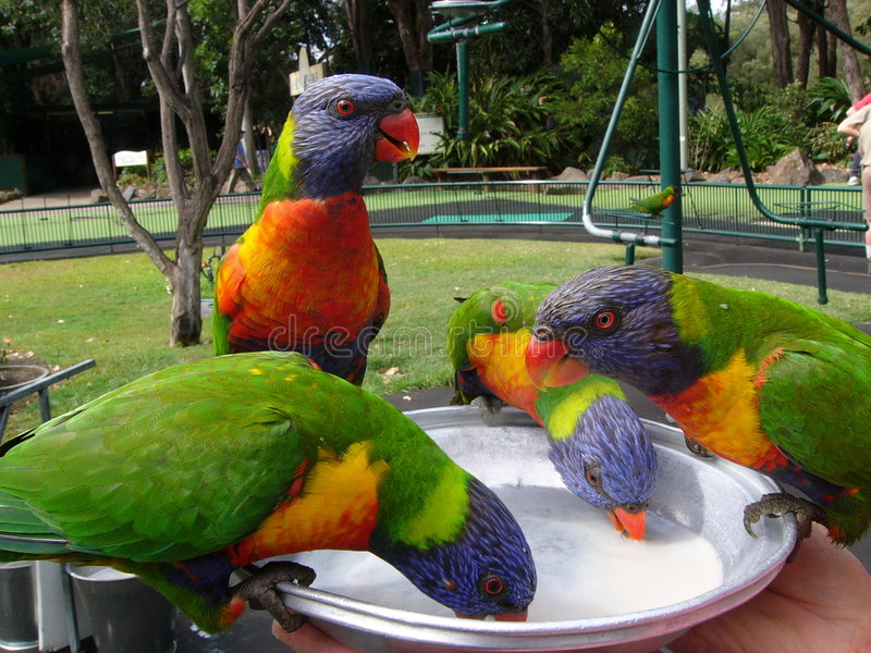 Download Colourful parrot stock image. Image of prey, parrot, meal - 6154177