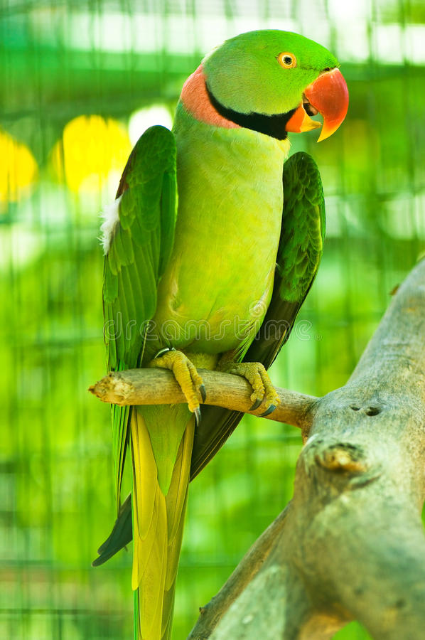 Colourful parrot sitting on the perch stock photos