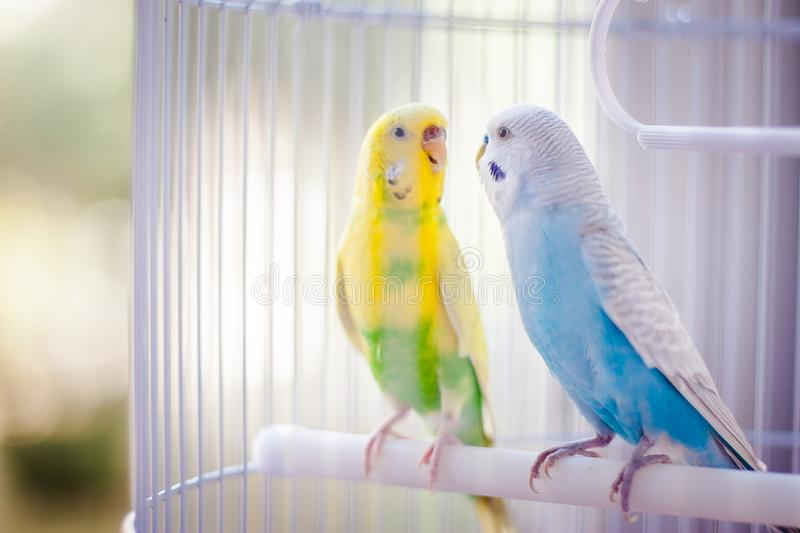 Colourful parrots in the cage stock photo