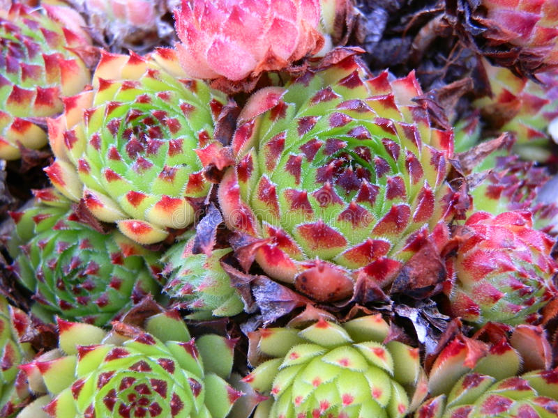 Colourful plants. Beautiful picture of colourful plants royalty free stock images