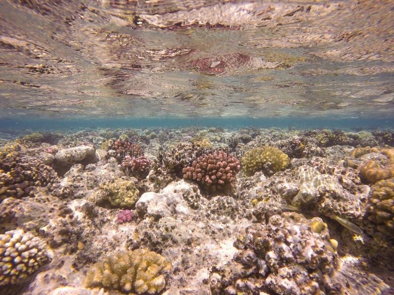Colourful Podwodna rafa koralowa obrazy royalty free