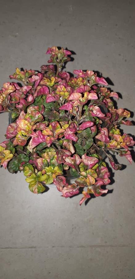 Colourful roślina zdjęcie stock