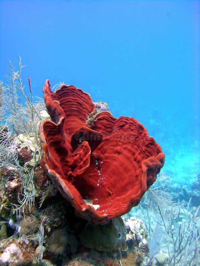 Colourful sponges stock photos