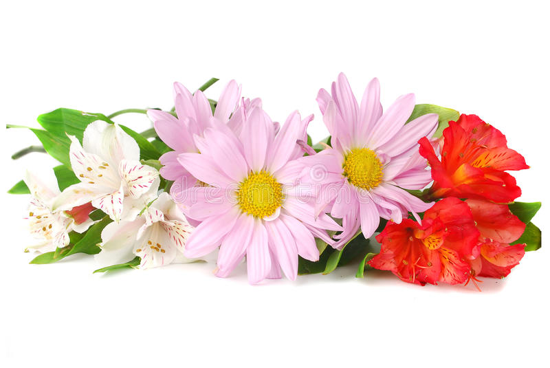 Download Colourful Summer Flowers Mix. Stock Photo - Image: 12720622