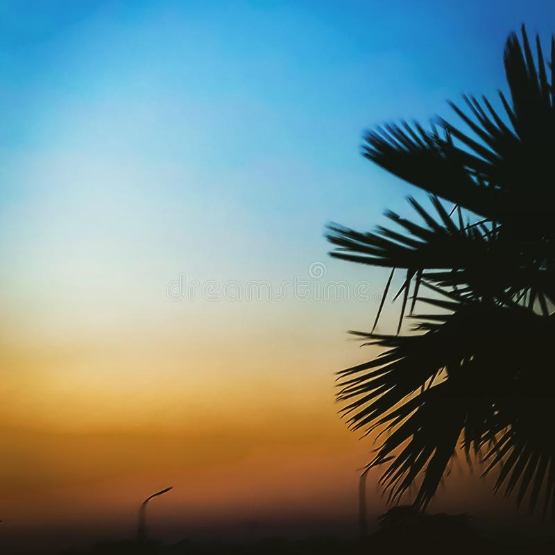 A colourful sunset behind a palm tree stock photos