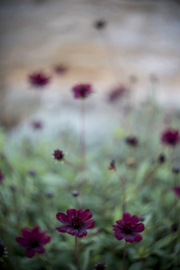 Colourful Swirley Bokeh Flowers Free Public Domain Cc0 Image