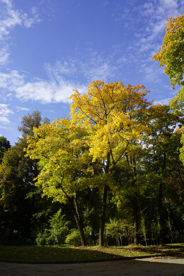 Colourful trees in fall stock images