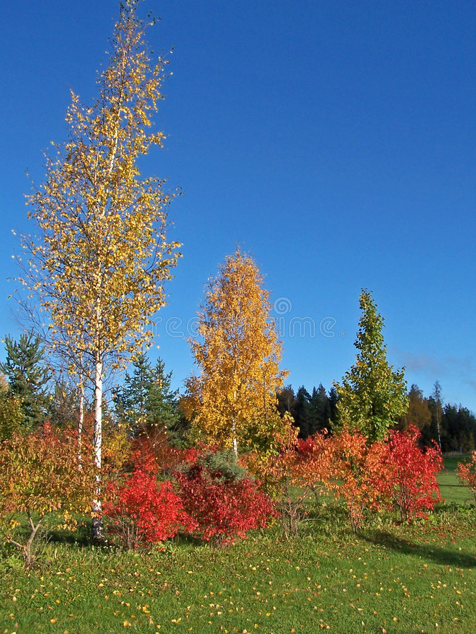 Free Colourful Trees Surrounding Golf Field Stock Photos - 988483