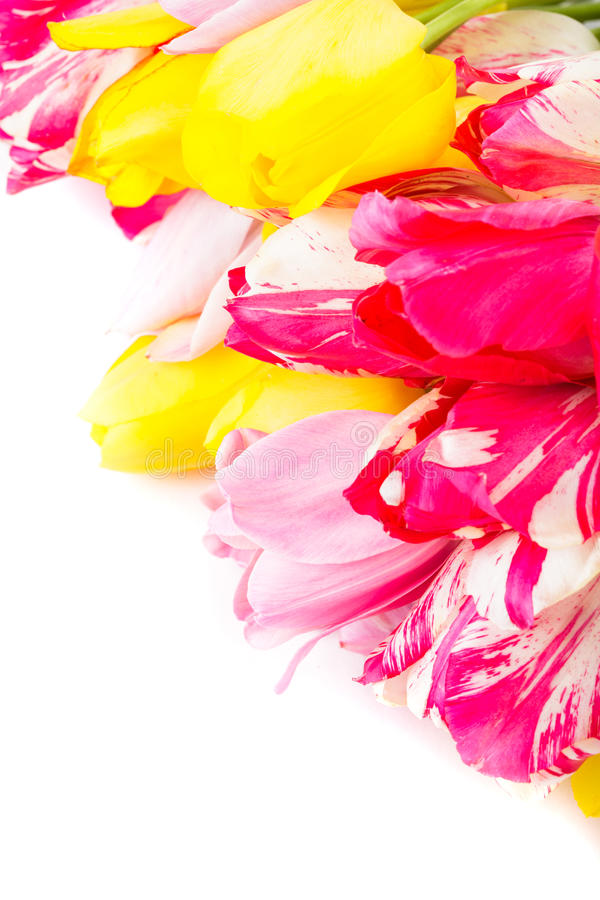 Download Colourful tulips stock image. Image of gardening, colourful - 28550951