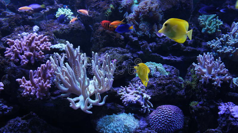 Colourful underwater world royalty free stock images
