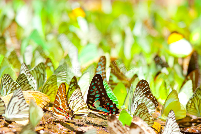 Colourful of wings stock images