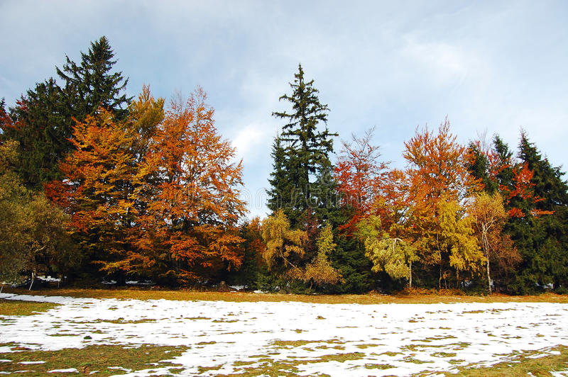 Colourfulautumn avec la neige photos stock