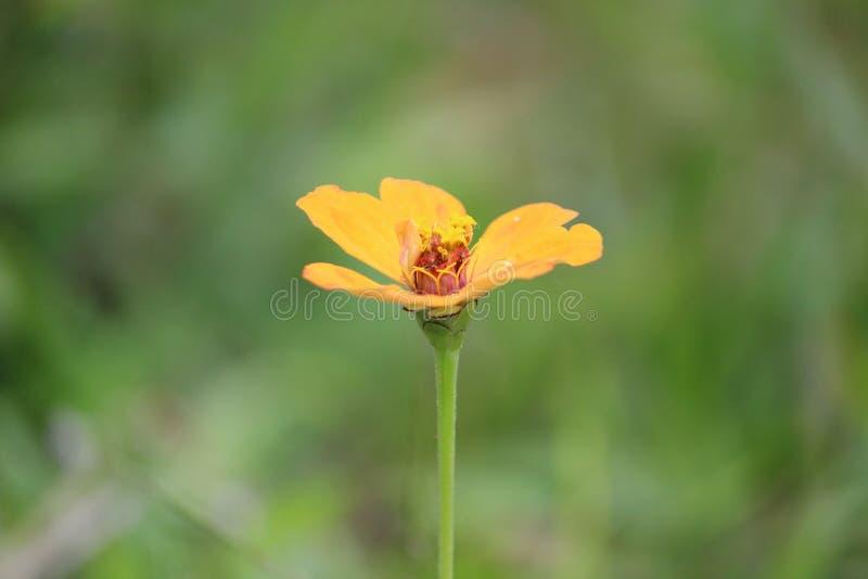 colourfull modelo del amor del boekh de la flor imagen de archivo
