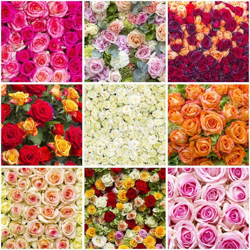 Colourfull róże - kolaż zdjęcia stock